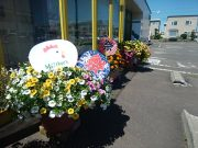 今週末は上野幌店『ぴよぴよ夏まつり』です!の画像
